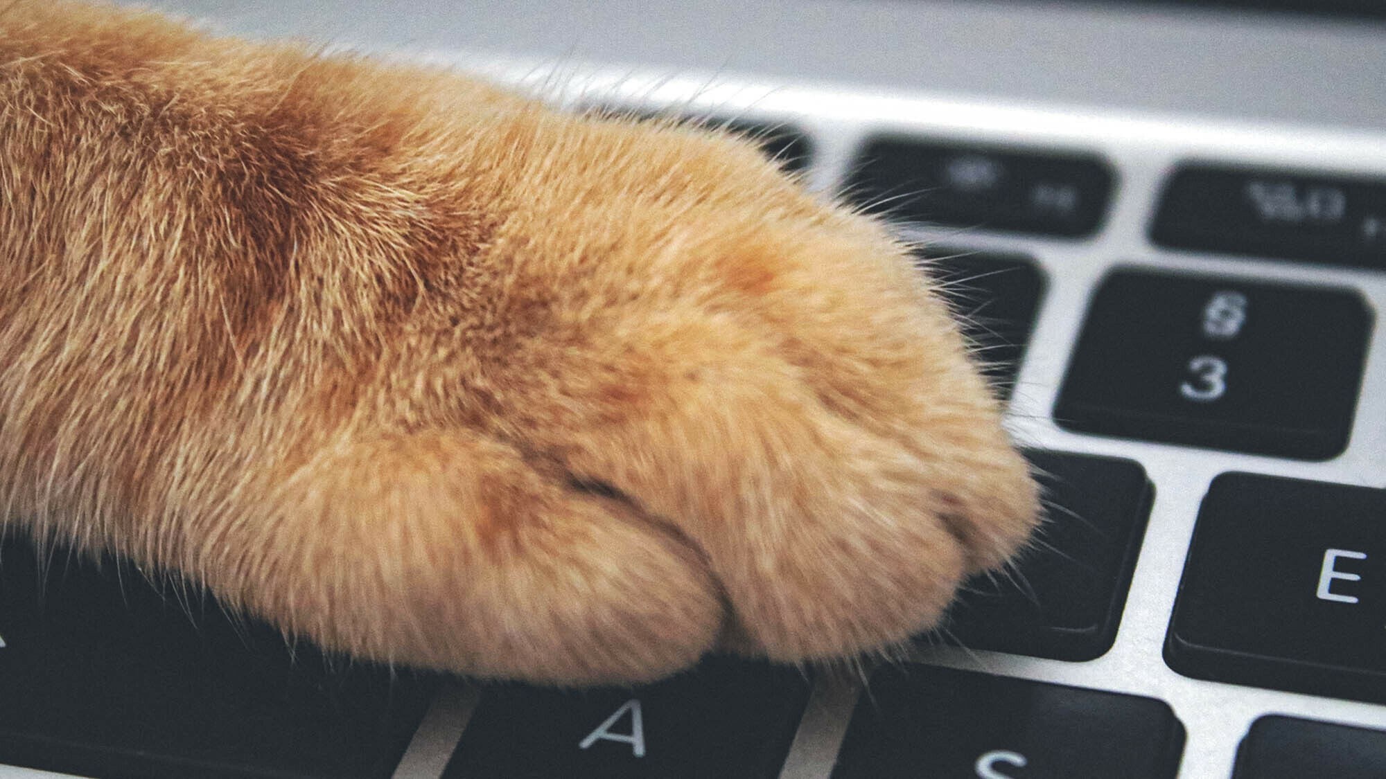 Close up of a cat's paw on a keyboard